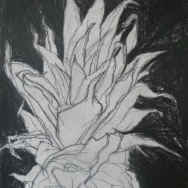 ananas tekening in zwarte achtergrond black and white drawing pineapple