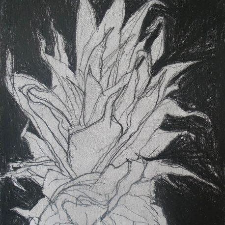 ananas tekening in zwarte achtergrond black and white drawing pineapple