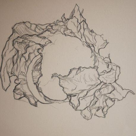zwart-wit tekening bloemkool black and white drawing cauliflower