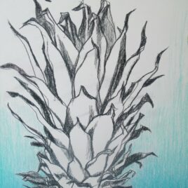 drawing pineapple tekening ananas blue ananas colourpencil drawing of a pineapple