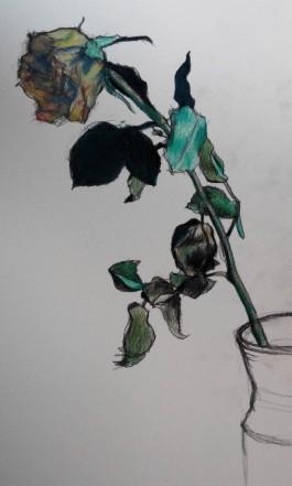 tekening roos, charcoal flower
