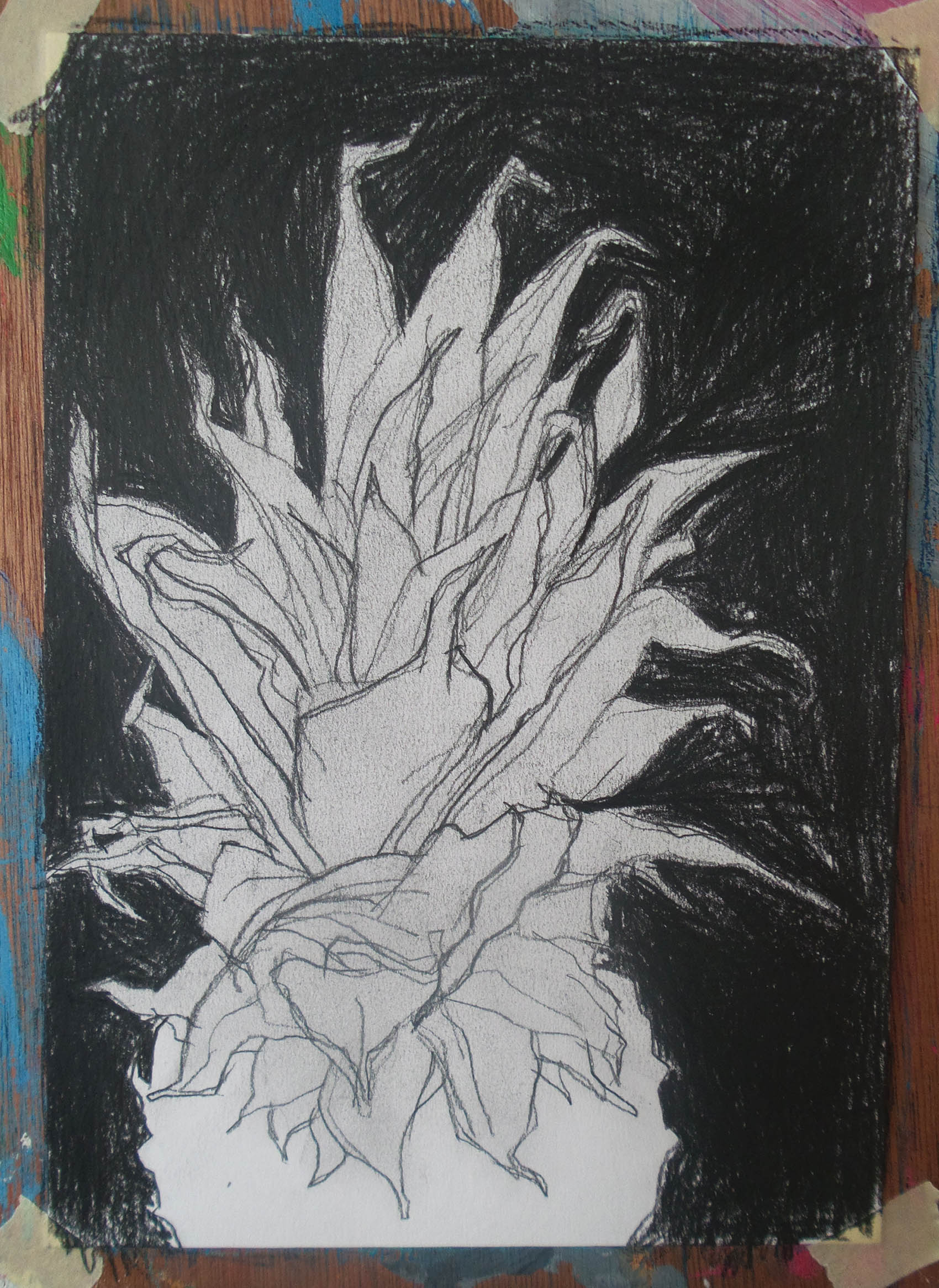 zwart-wit tekening ananas in zwart black and white drawing pineapple