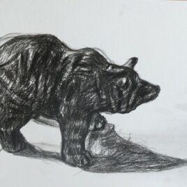 beer tekenen, tekening beer