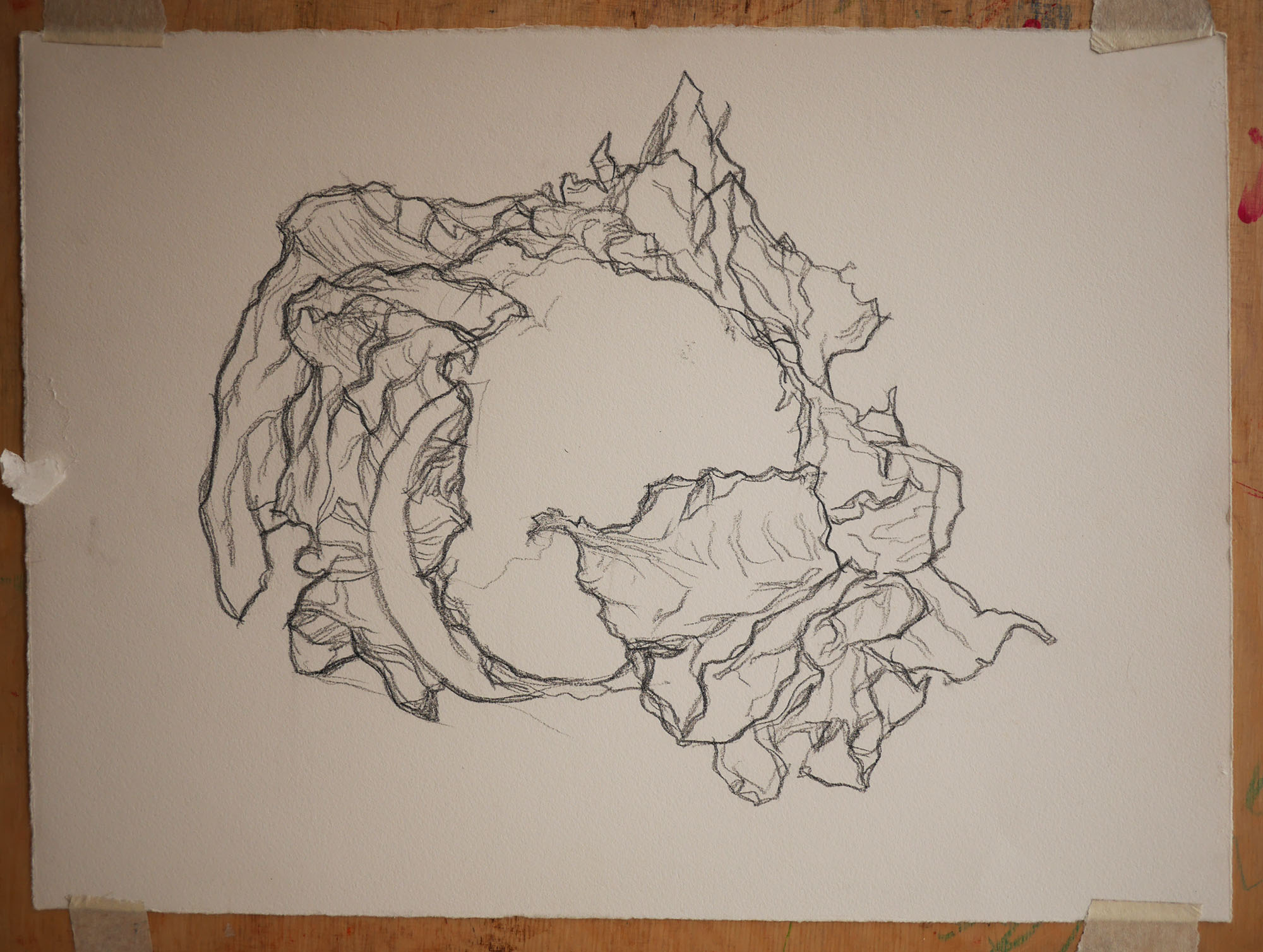 zwart-wit tekening bloemkool black and white drawing cauliflower