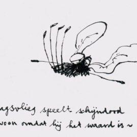 Eendagsvliegje
